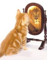 gatto-leone-specchio