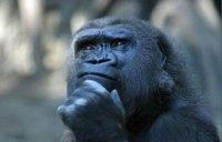 scimpanze-pensieroso